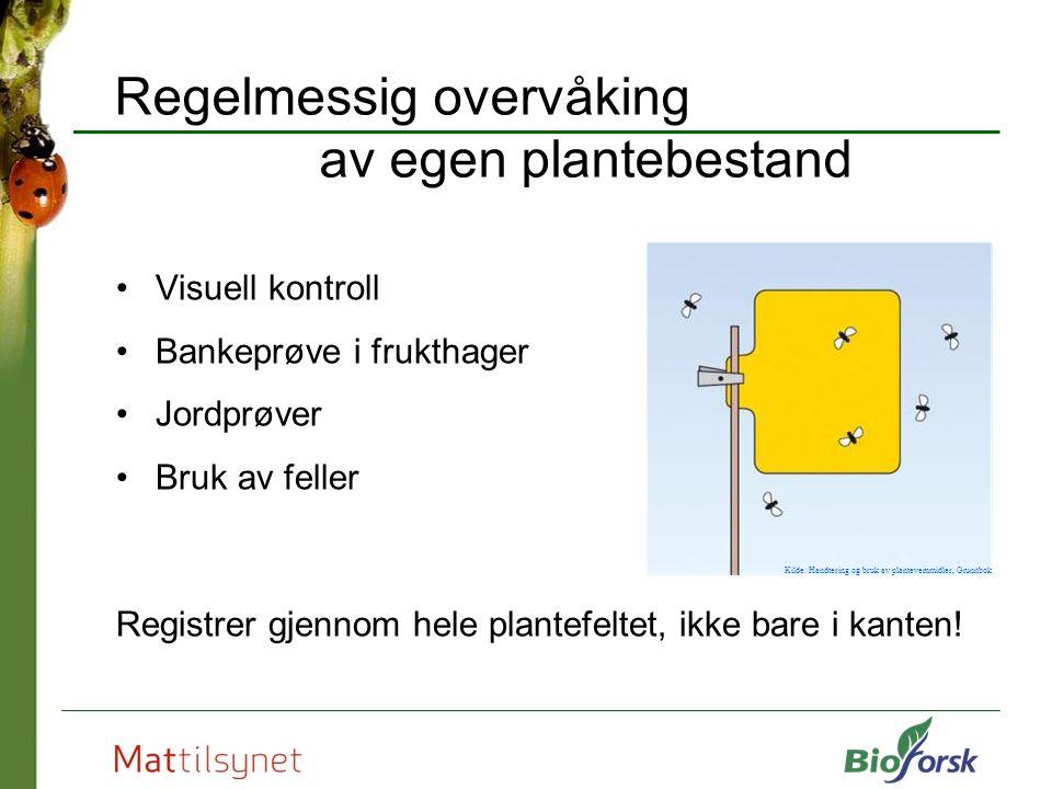 Regelmessig overvåking av egen plantebestand Visuell kontroll Bankeprøve i frukthager Jordprøver Bruk av feller Registrer gjennom hele plantefeltet, ikke bare i kanten.