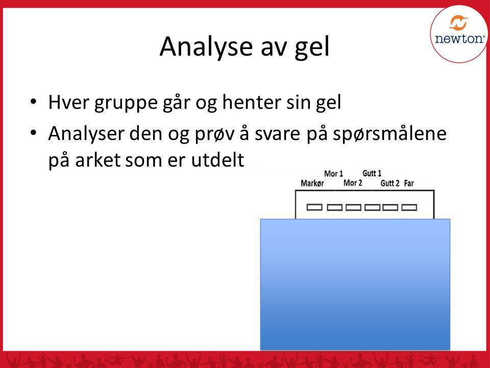 Analyse av gel Hver gruppe går og henter sin gel Analyser den og prøv å svare på spørsmålene på arket som er utdelt