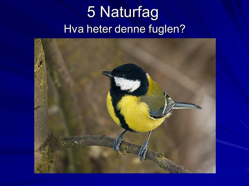 5 Naturfag Hva heter denne fuglen?