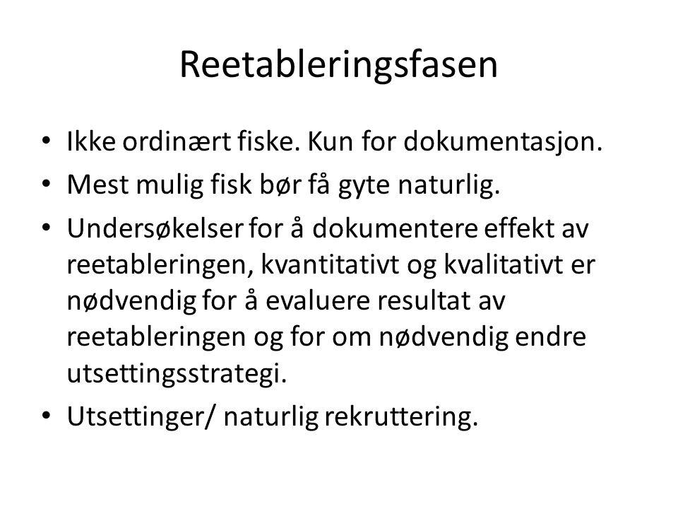 Reetableringsfasen Ikke ordinært fiske. Kun for dokumentasjon.
