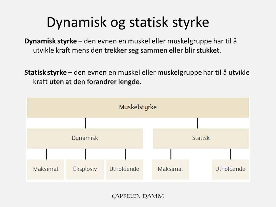 Dynamisk og statisk styrke Maksimal dynamisk styrke – den største kraften en muskel eller muskelgruppe kan utvikle én gang (1 RM = 1 repetisjon maksimum) Eksplosiv dynamisk styrke - størst mulig kraftutvikling samtidig som muskelen trekker seg raskt sammen Utholdende dynamisk styrke – den evnen en muskel eller muskelgruppe har til å utvikle kraft mange ganger (kalles også muskulær utholdenhet) Maksimal statisk styrke – den evnen en muskel eller muskelgruppe har til å utvikle maksimal muskelspenning mot svært stor motstand i kort tid uten at muskelen forandrer lengde Utholdende statisk styrke – den evnen en muskel eller muskelgruppe har til å holde muskelspenning mot liten eller moderat motstand i lang tid uten at muskelen forandrer lengde