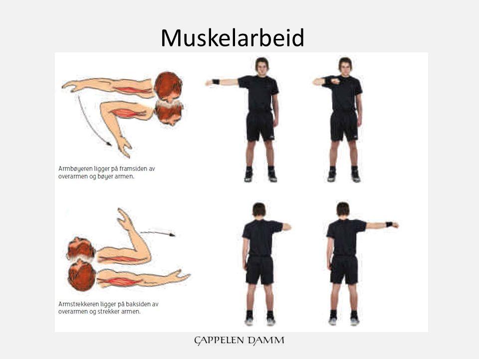 Muskelarbeid