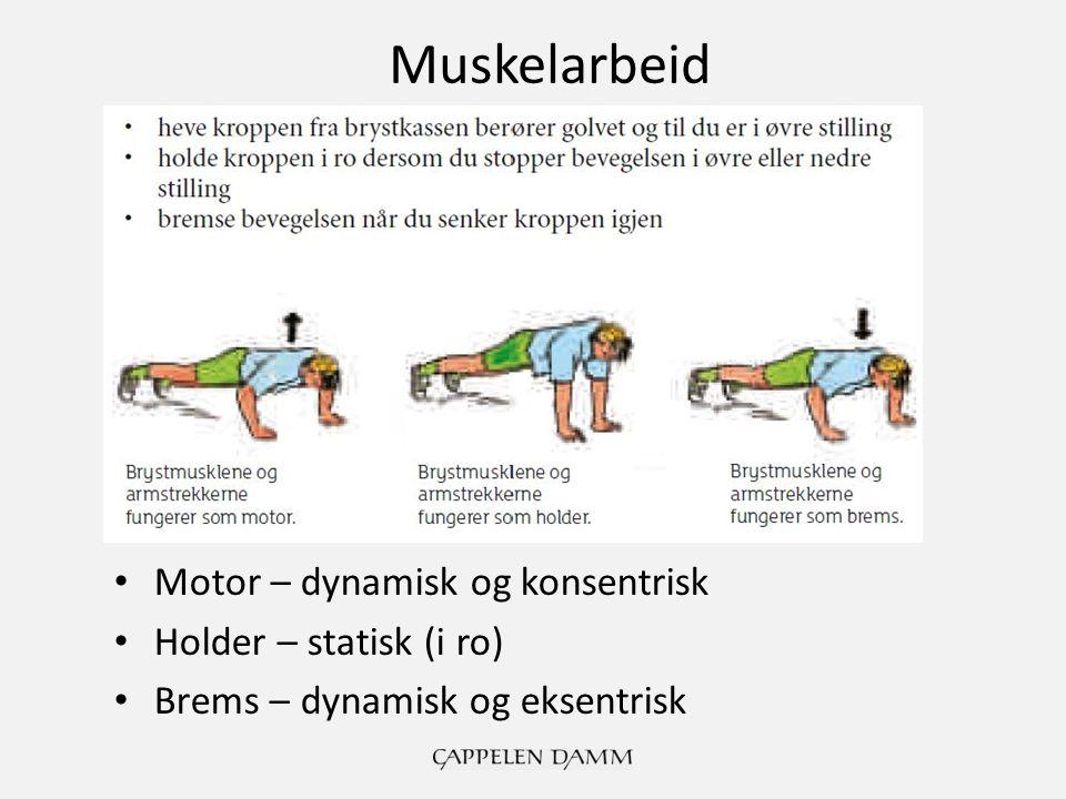 Motor – dynamisk og konsentrisk Holder – statisk (i ro) Brems – dynamisk og eksentrisk Muskelarbeid