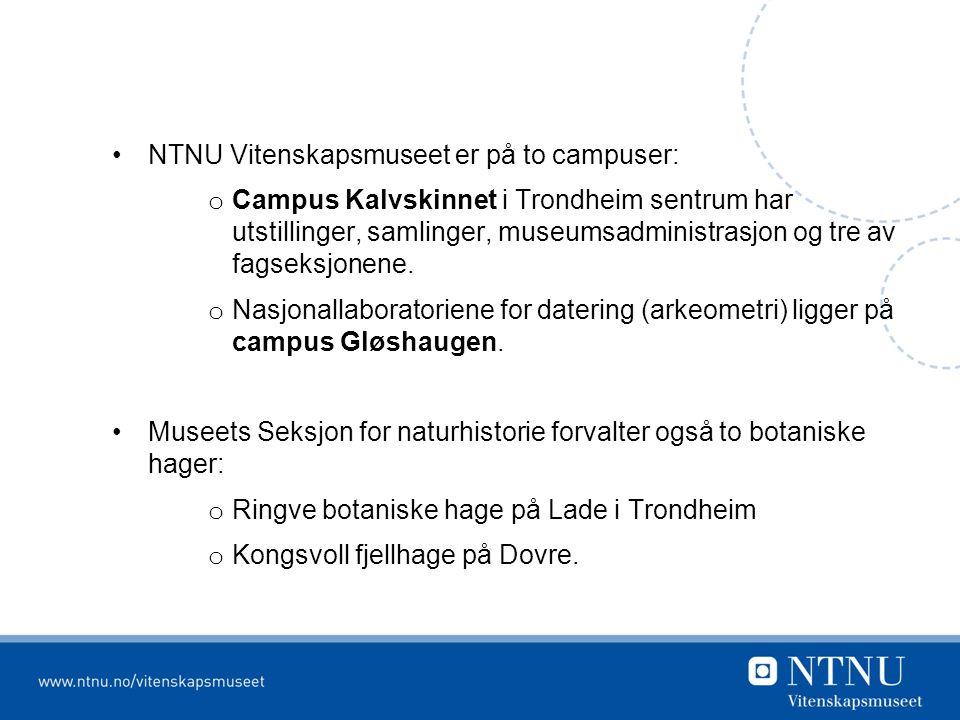 NTNU Vitenskapsmuseet er på to campuser: o Campus Kalvskinnet i Trondheim sentrum har utstillinger, samlinger, museumsadministrasjon og tre av fagseksjonene.