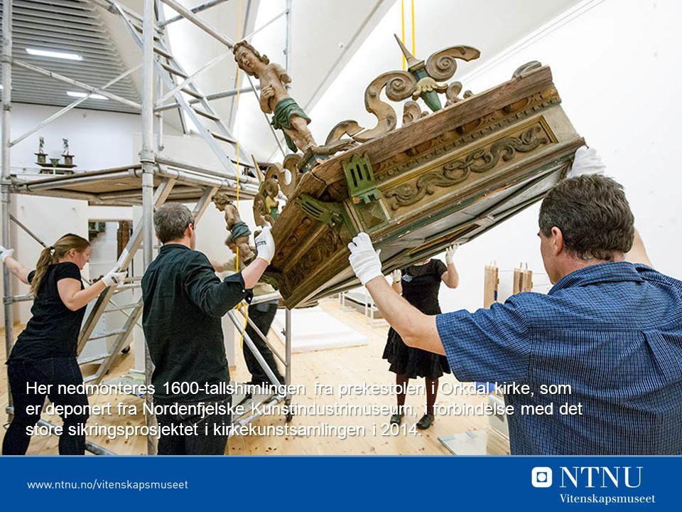 Her nedmonteres 1600-tallshimlingen fra prekestolen i Orkdal kirke, som er deponert fra Nordenfjelske Kunstindustrimuseum, i forbindelse med det store sikringsprosjektet i kirkekunstsamlingen i 2014.