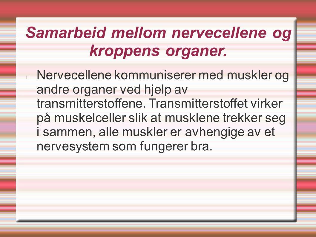 Samarbeid mellom nervecellene og kroppens organer. Nervecellene kommuniserer med muskler og andre organer ved hjelp av transmitterstoffene. Transmitte