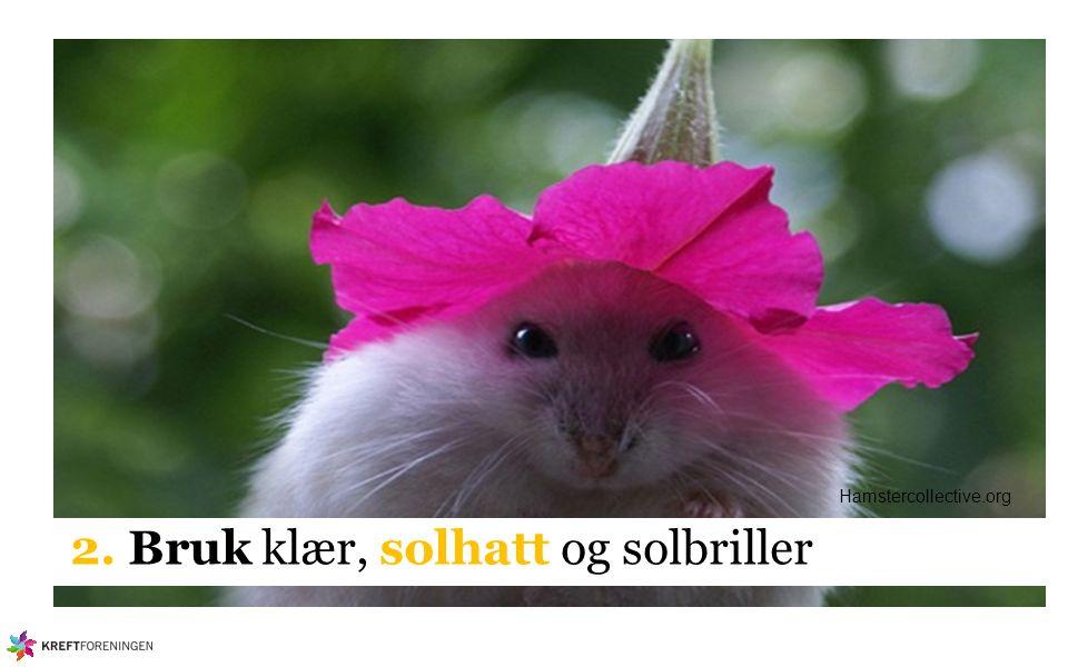 2. Bruk klær, solhatt og solbriller Hamstercollective.org