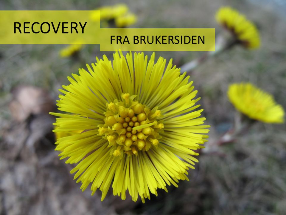 RECOVERY FRA BRUKERSIDEN