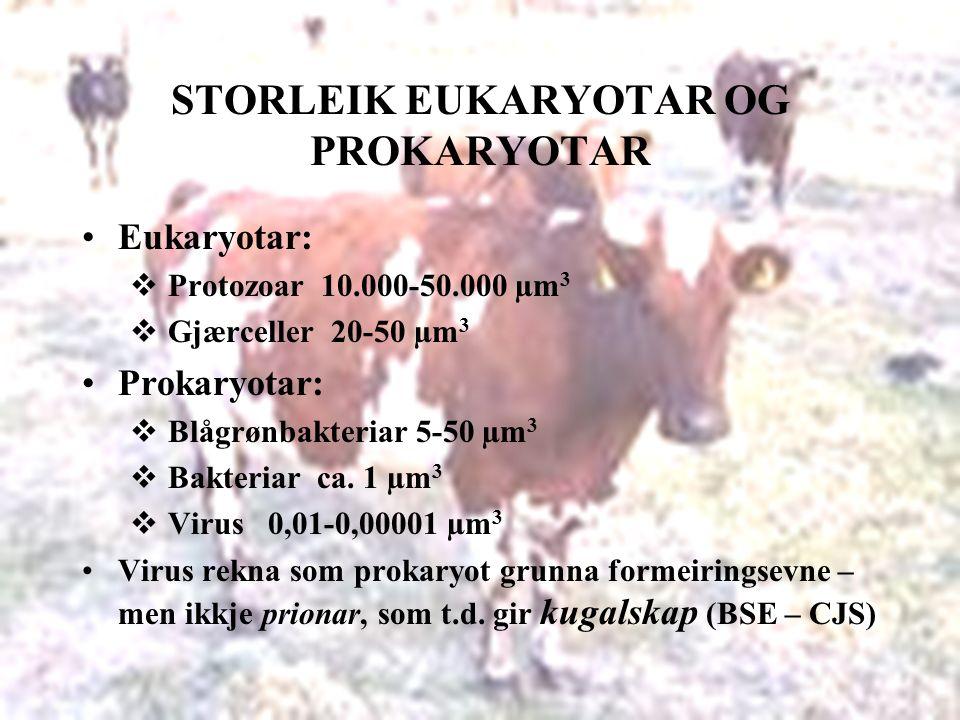 STORLEIK EUKARYOTAR OG PROKARYOTAR Eukaryotar:  Protozoar 10.000-50.000 µm 3  Gjærceller 20-50 µm 3 Prokaryotar:  Blågrønbakteriar 5-50 µm 3  Bakteriar ca.