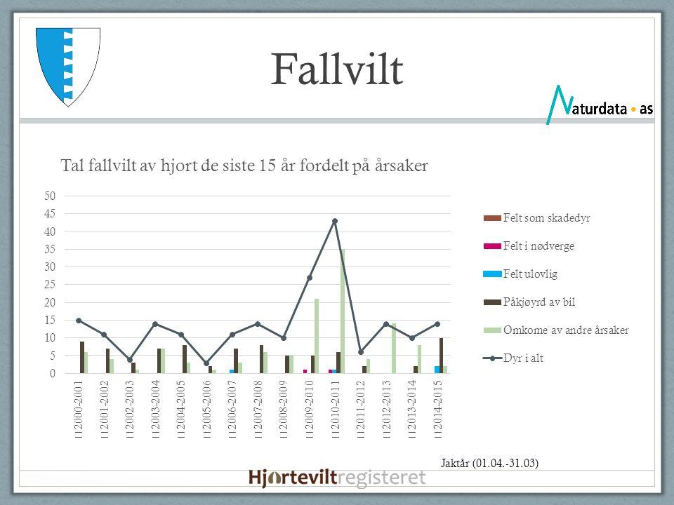 Fallvilt Jaktår (01.04.-31.03)