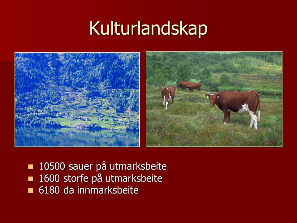 Produksjon 2000 2004 2000 2004 Kjøt tonn 486 469 Kjøt tonn 486 469 Melk tonn 7206 6787 Melk tonn 7206 6787 Tømmer m3 3940 4765 Tømmer m3 3940 4765 Ope