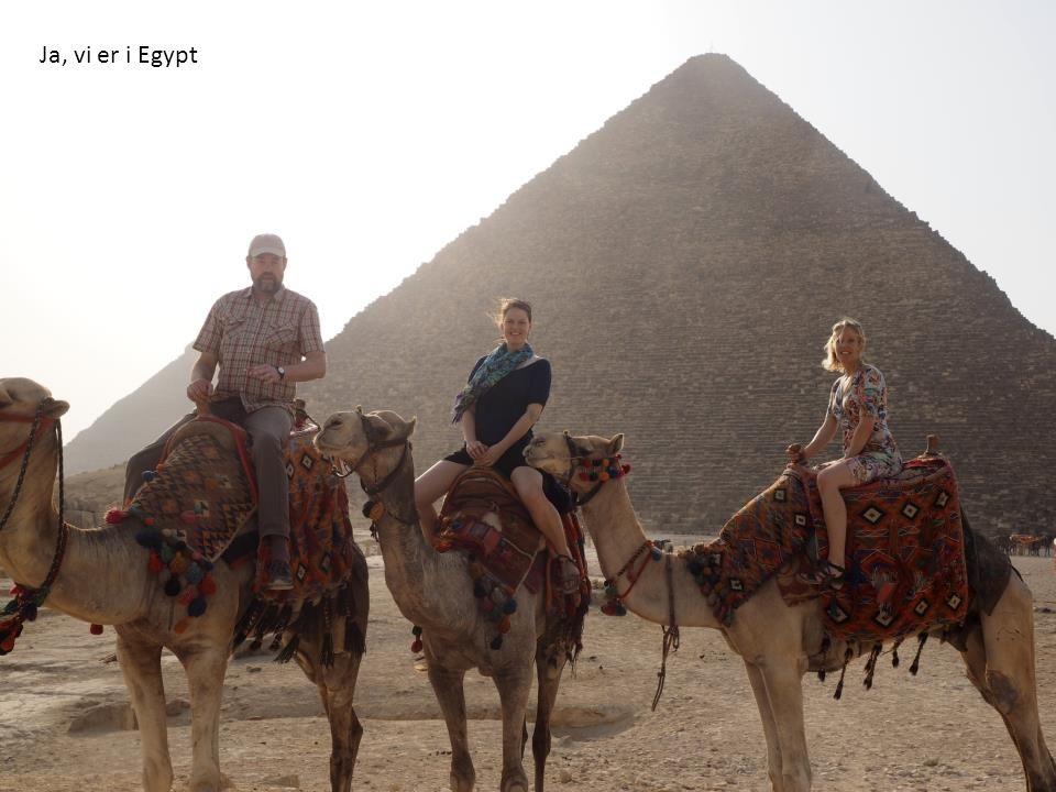 Ja, vi er i Egypt