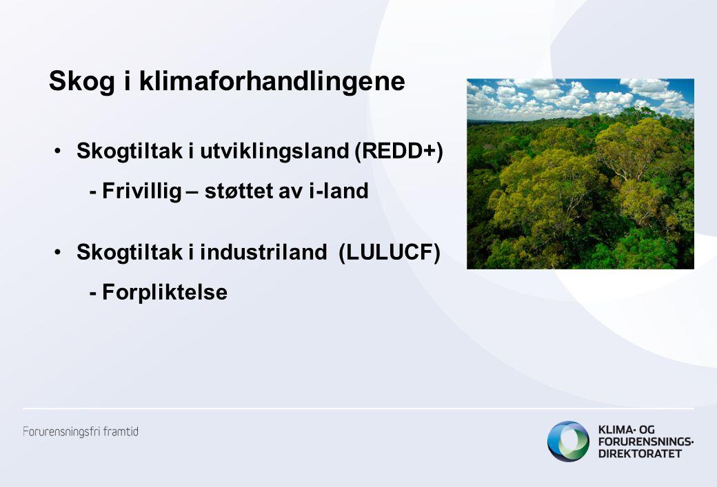 Internasjonale regneregler for skog: –Ulike regler for i- og u-land –Alle forvaltede skogarealer inkludert –Utslipp/opptak = C-stock t2 – C-stock t1 –Både levende biomasse, skogsavfall og jordkarbon –Karbon som tas ut av skogen regnes som umiddelbart utslipp, uten hensyn til langsiktige virkninger –Ett tonn bio-CO2 = ett tonn fossil-CO2 –Alle utslipp/opptak rapporteres til Klimakonvensjonen, men kun liten andel av skog blir kreditert under Kyoto