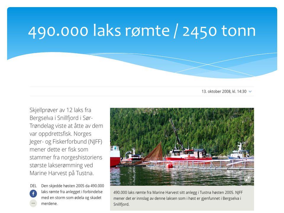 490.000 laks rømte / 2450 tonn