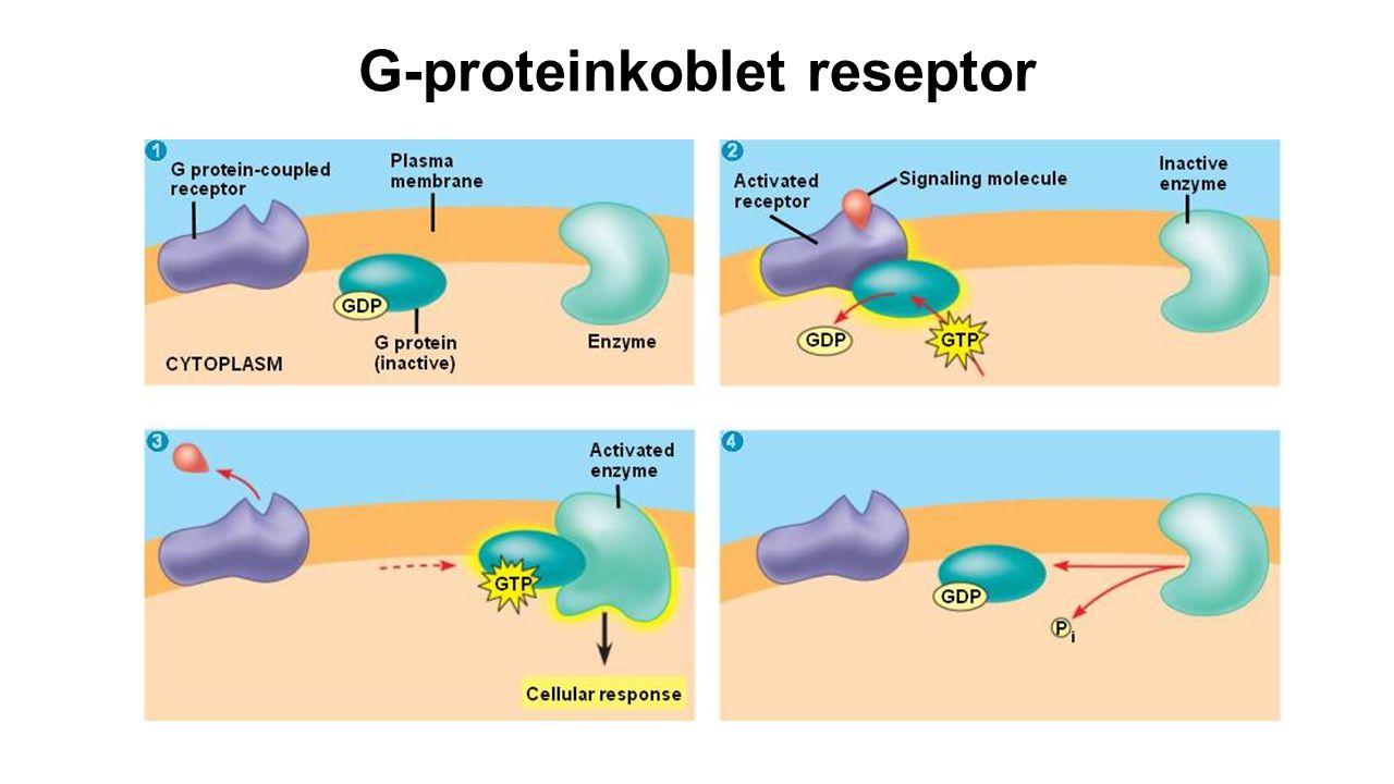 G-proteinkoblet reseptor