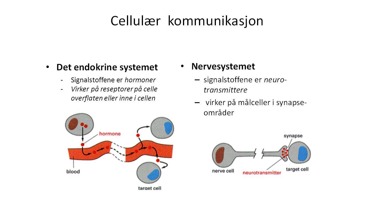 -Signalstoffene er hormoner -Virker på reseptorer på celle overflaten eller inne i cellen