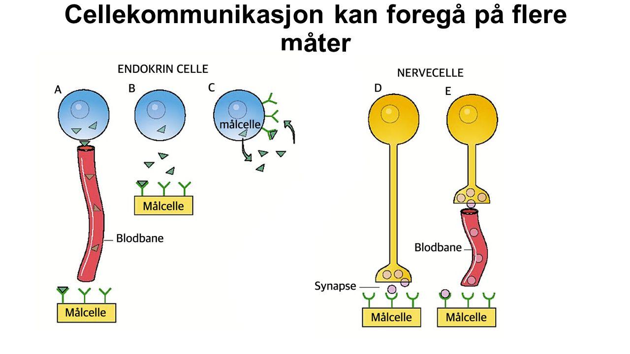 Cellekommunikasjon kan foregå på flere måter