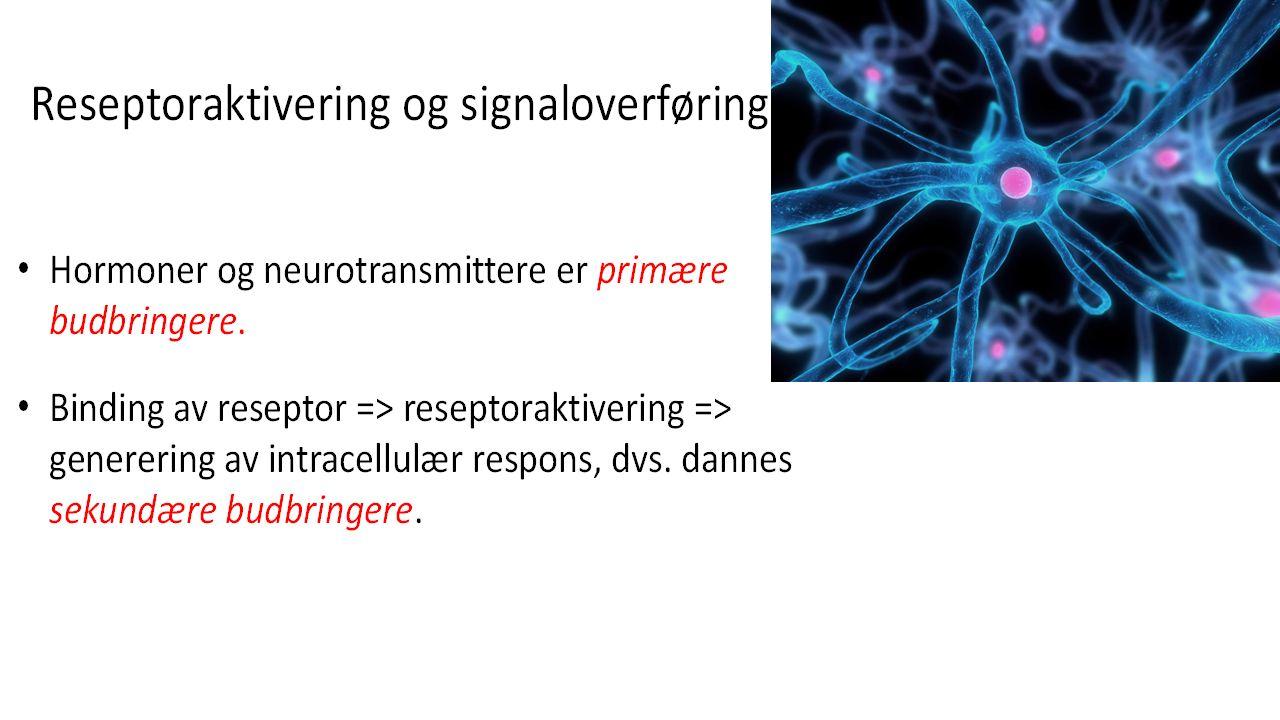 Regulering av biologisk respons Avhengig av antall reseptormolekyler som er bundet Høy konsentrasjon av signalmolekyler => mange reseptorer bindes => sterk respons Lav konsentrasjon av signalmolekyl => få reseptorer bindes => svak respons