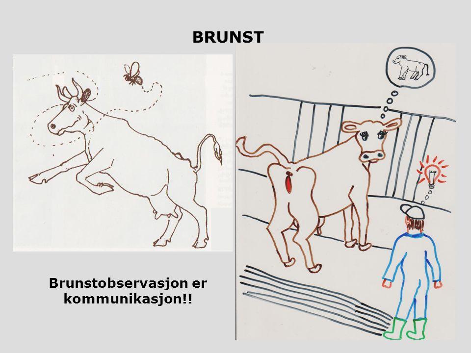 BRUNST Brunstobservasjon er kommunikasjon!!