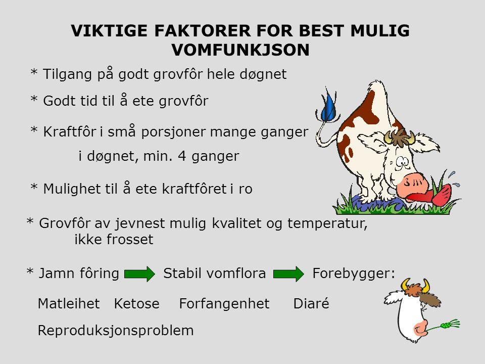Endetarm Urinblære Kjønnslepper Børhorn Eggstokk Børhals