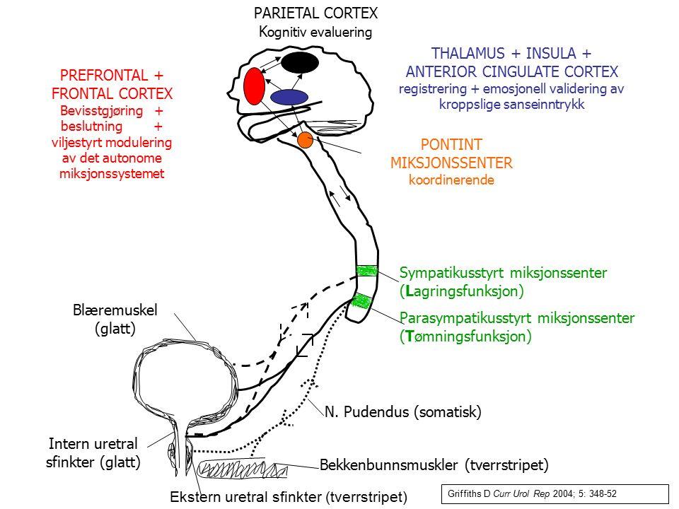 PONTINT MIKSJONSSENTER koordinerende Sympatikusstyrt miksjonssenter (Lagringsfunksjon) Parasympatikusstyrt miksjonssenter (Tømningsfunksjon) N. Pudend