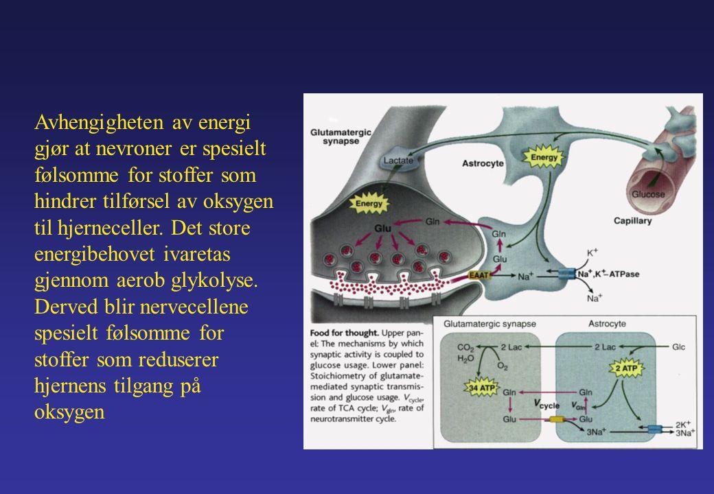Avhengigheten av energi gjør at nevroner er spesielt følsomme for stoffer som hindrer tilførsel av oksygen til hjerneceller.