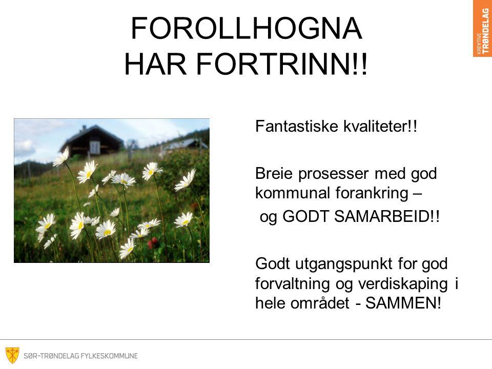 FOROLLHOGNA HAR FORTRINN!. Fantastiske kvaliteter!.
