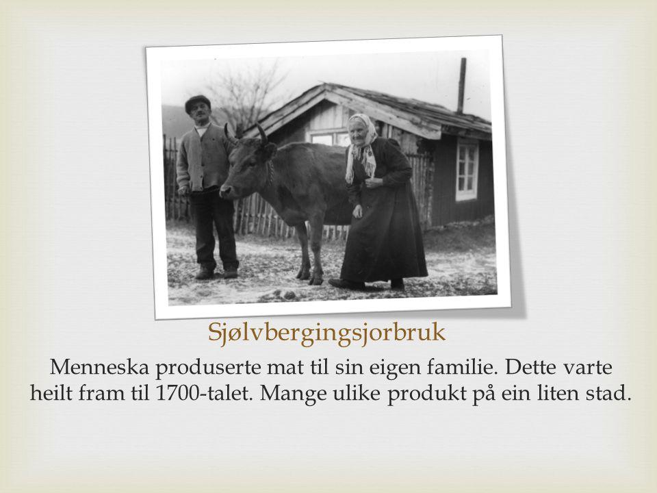 Sjølvbergingsjorbruk Menneska produserte mat til sin eigen familie.