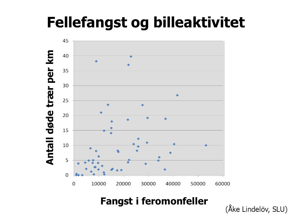 Antall døde trær per km Fangst i feromonfeller Fellefangst og billeaktivitet (Åke Lindelöv, SLU)