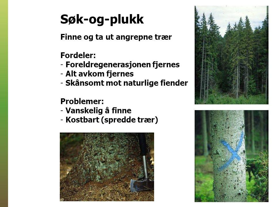 Finne og ta ut angrepne trær Fordeler: - Foreldregenerasjonen fjernes - Alt avkom fjernes - Skånsomt mot naturlige fiender Problemer: - Vanskelig å finne - Kostbart (spredde trær) Søk-og-plukk