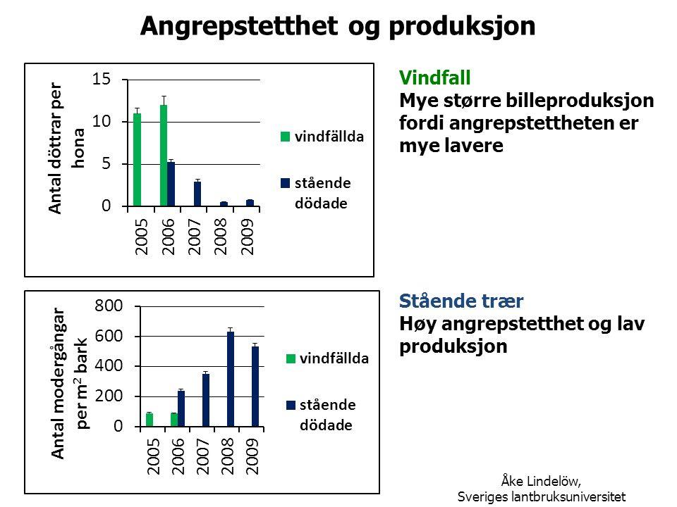 Angrepstetthet og produksjon Vindfall Mye større billeproduksjon fordi angrepstettheten er mye lavere Stående trær Høy angrepstetthet og lav produksjon Åke Lindelöw, Sveriges lantbruksuniversitet