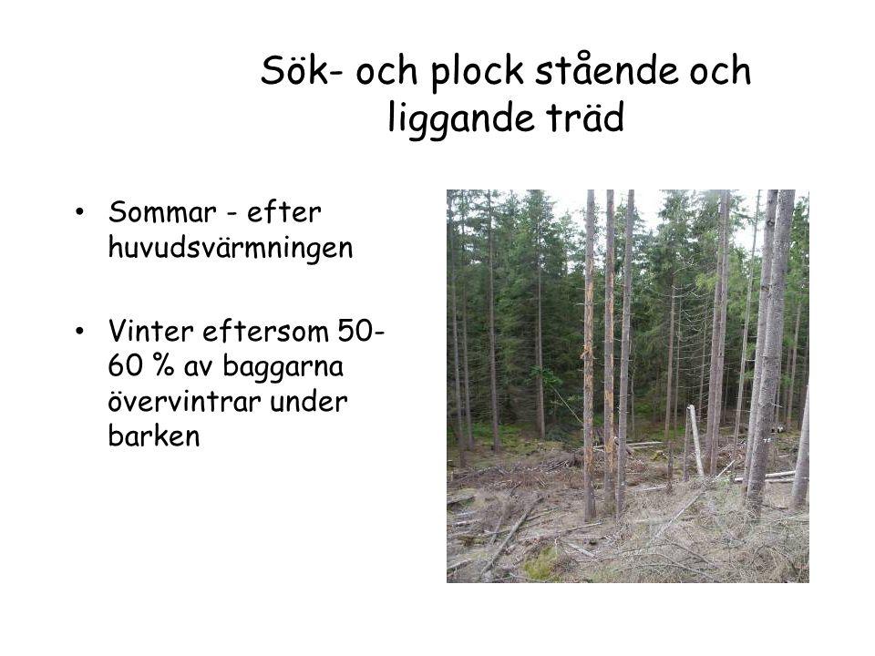 Sök- och plock stående och liggande träd Sommar - efter huvudsvärmningen Vinter eftersom 50- 60 % av baggarna övervintrar under barken