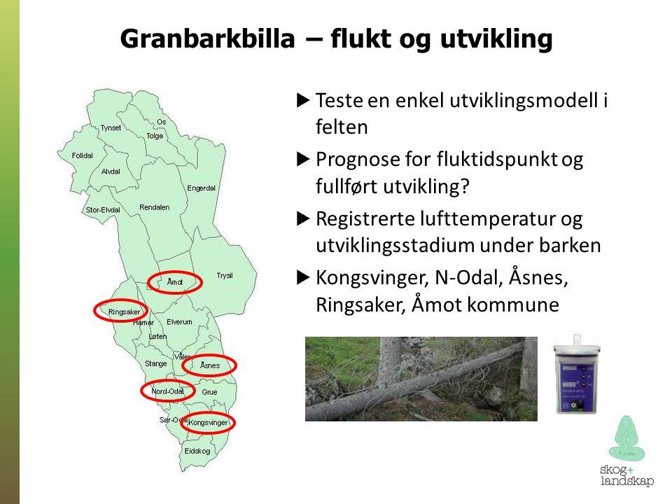 Granbarkbilla – flukt og utvikling  Teste en enkel utviklingsmodell i felten  Prognose for fluktidspunkt og fullført utvikling.