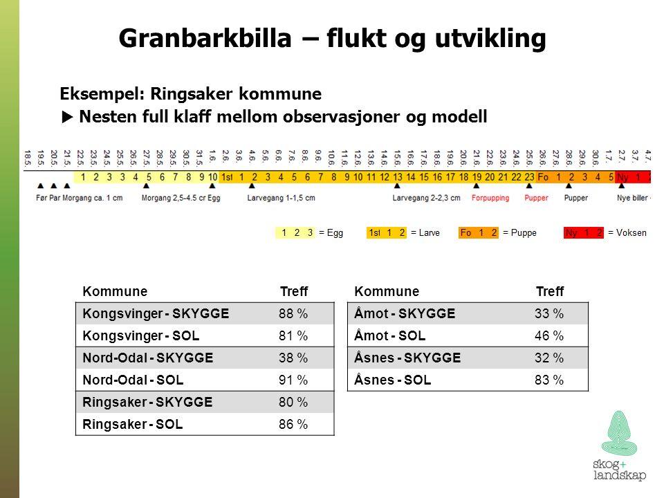 Granbarkbilla – flukt og utvikling Eksempel: Ringsaker kommune  Nesten full klaff mellom observasjoner og modell KommuneTreff Kongsvinger - SKYGGE88 % Kongsvinger - SOL81 % Nord-Odal - SKYGGE38 % Nord-Odal - SOL91 % Ringsaker - SKYGGE80 % Ringsaker - SOL86 % KommuneTreff Åmot - SKYGGE33 % Åmot - SOL46 % Åsnes - SKYGGE32 % Åsnes - SOL83 %