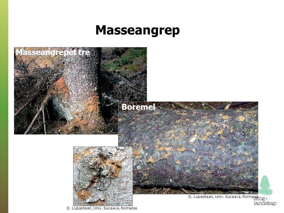 Heggspinnmøll - en spektakulær art med mye spontanrapportering
