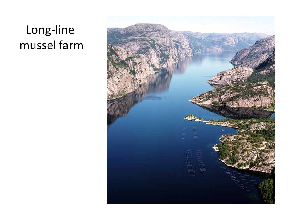 Long-line mussel farm