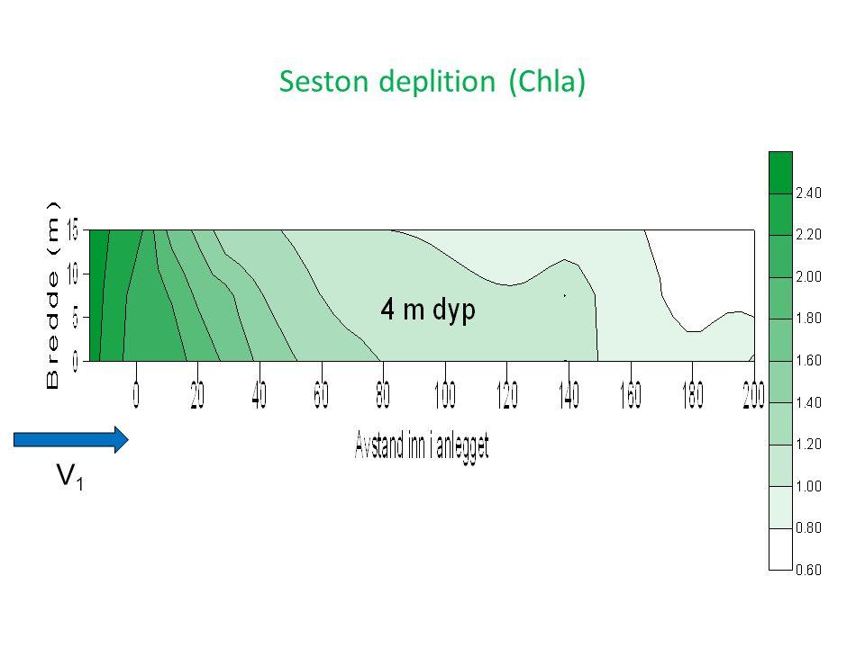 Seston deplition (Chla) V1V1