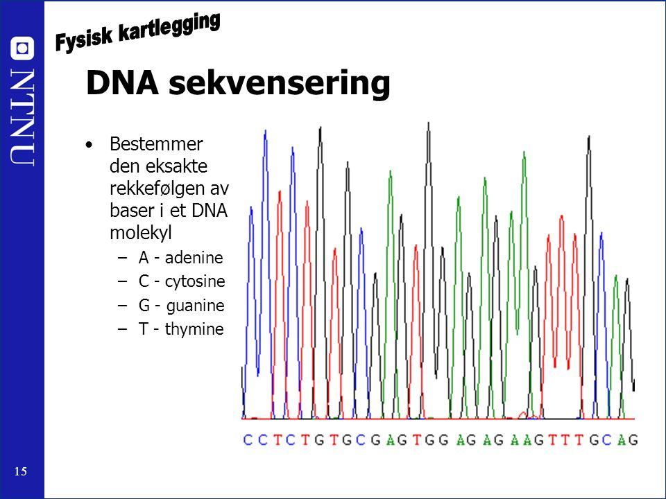 15 DNA sekvensering Bestemmer den eksakte rekkefølgen av baser i et DNA molekyl –A - adenine –C - cytosine –G - guanine –T - thymine