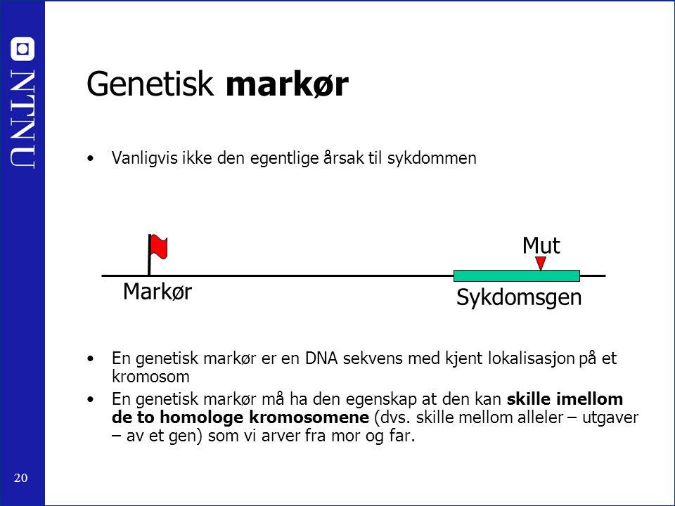 20 Genetisk markør Vanligvis ikke den egentlige årsak til sykdommen En genetisk markør er en DNA sekvens med kjent lokalisasjon på et kromosom En gene