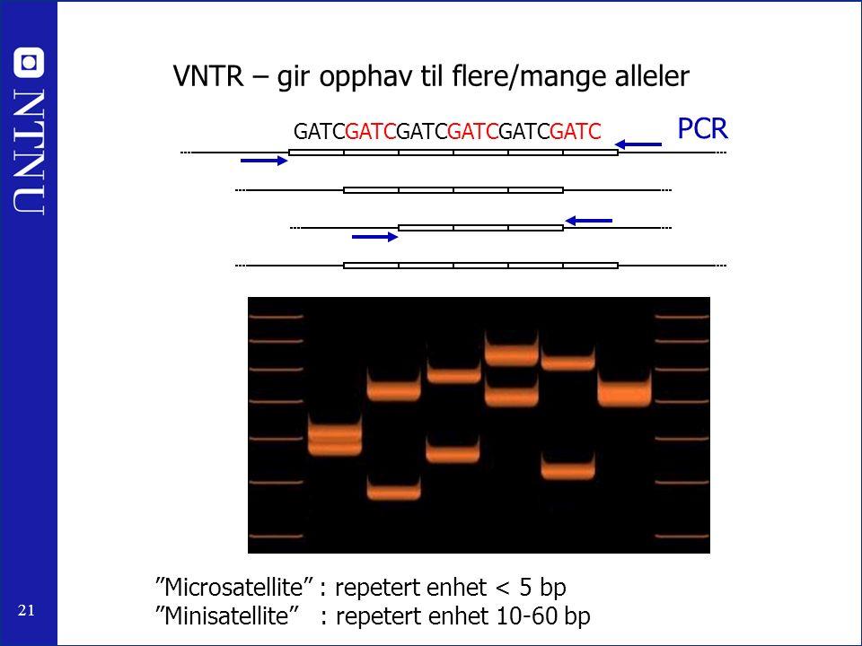 """21 VNTR – gir opphav til flere/mange alleler PCR """"Microsatellite"""" : repetert enhet < 5 bp """"Minisatellite"""" : repetert enhet 10-60 bp GATCGATCGATCGATCGA"""