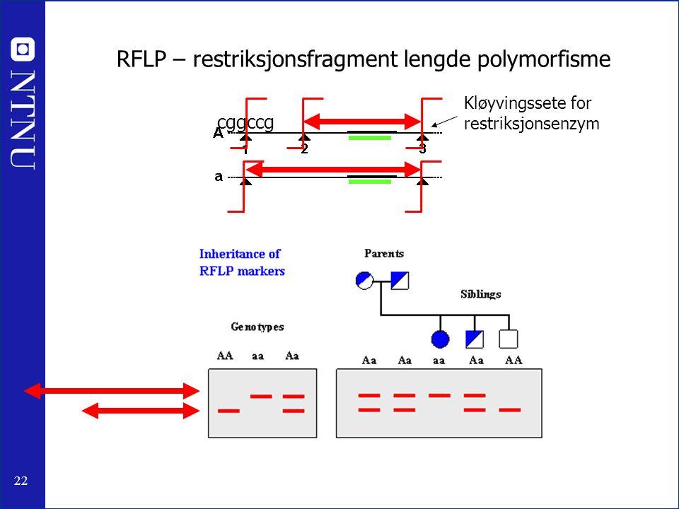 22 RFLP – restriksjonsfragment lengde polymorfisme Kløyvingssete for restriksjonsenzym cggccg