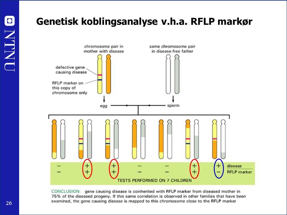 26 Genetisk koblingsanalyse v.h.a. RFLP markør