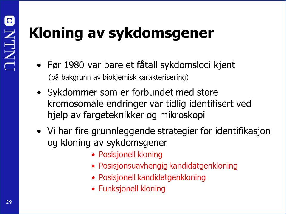 29 Kloning av sykdomsgener Før 1980 var bare et fåtall sykdomsloci kjent (på bakgrunn av biokjemisk karakterisering) Sykdommer som er forbundet med st