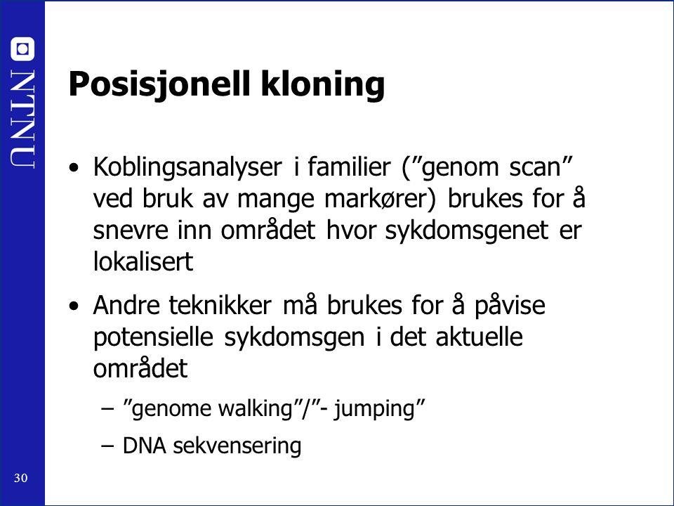 30 Posisjonell kloning Koblingsanalyser i familier ( genom scan ved bruk av mange markører) brukes for å snevre inn området hvor sykdomsgenet er lokalisert Andre teknikker må brukes for å påvise potensielle sykdomsgen i det aktuelle området – genome walking / - jumping –DNA sekvensering