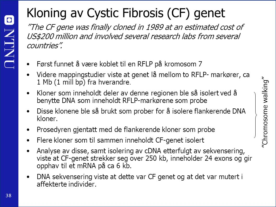 38 Kloning av Cystic Fibrosis (CF) genet Først funnet å være koblet til en RFLP på kromosom 7 Videre mappingstudier viste at genet lå mellom to RFLP- markører, ca 1 Mb (1 mill bp) fra hverandre.