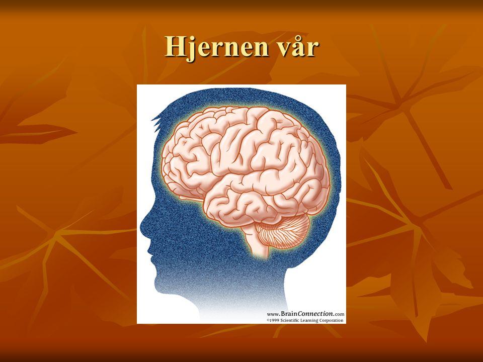 Hjernen vår