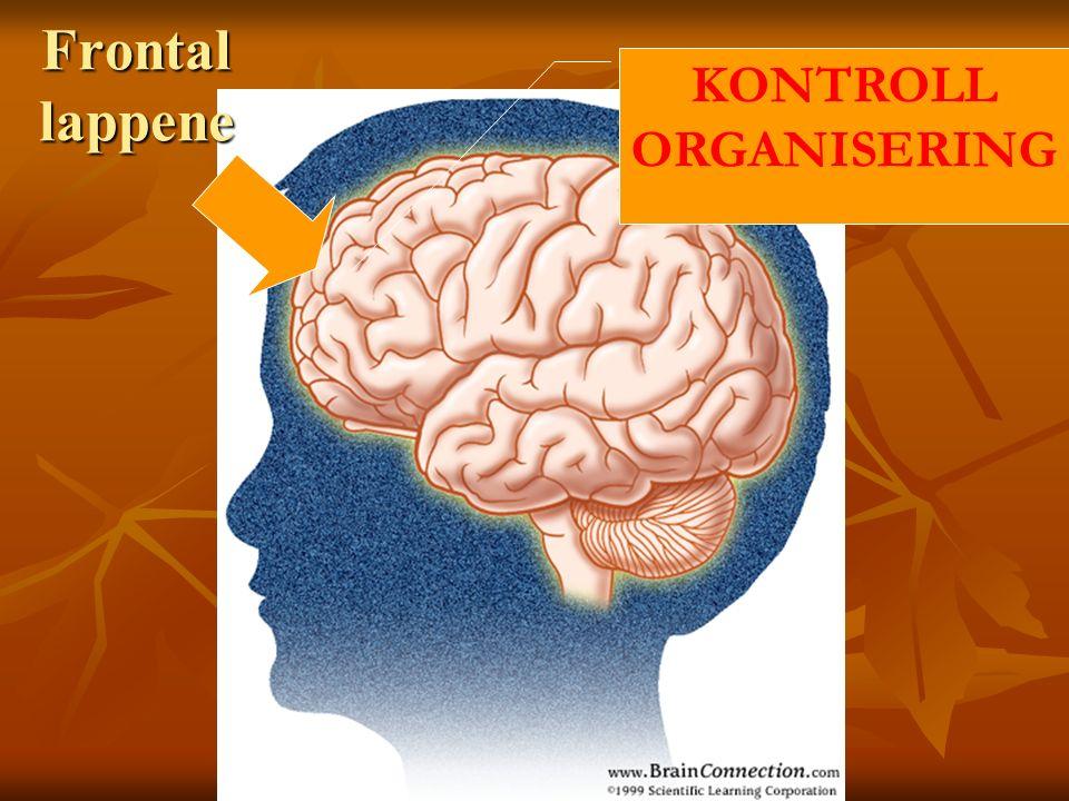 Frontal lappene KONTROLL ORGANISERING