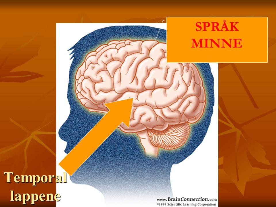 Occipital lappene SYN