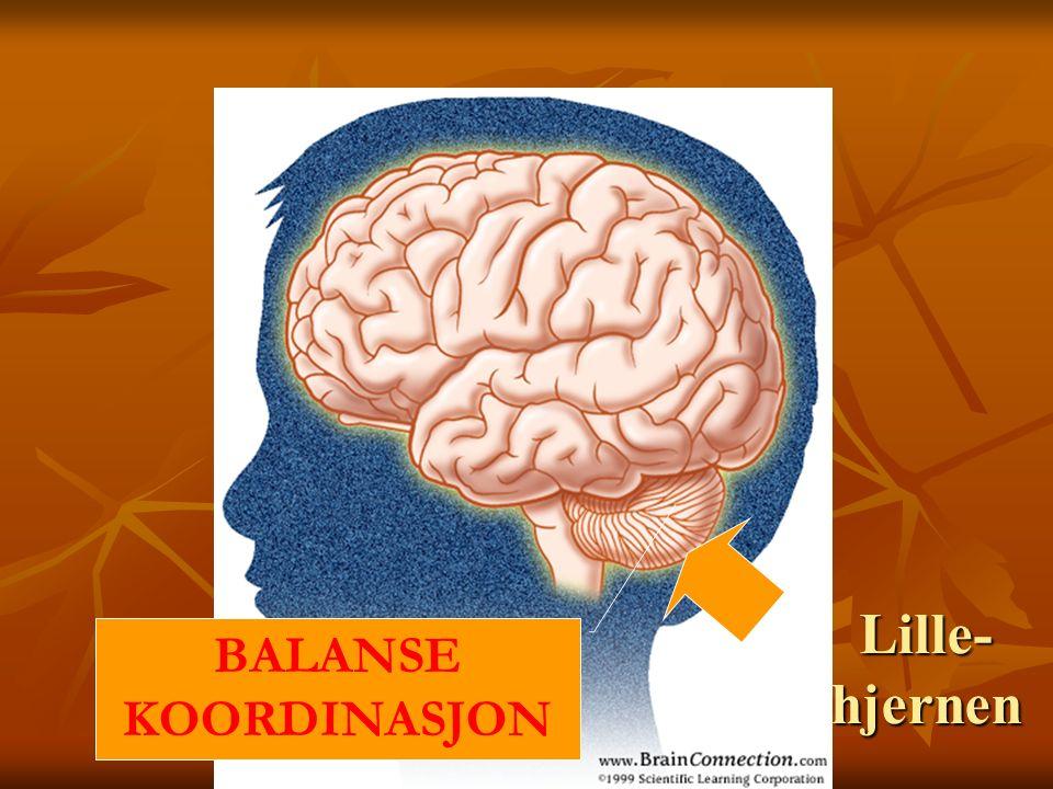 Lille- hjernen BALANSE KOORDINASJON