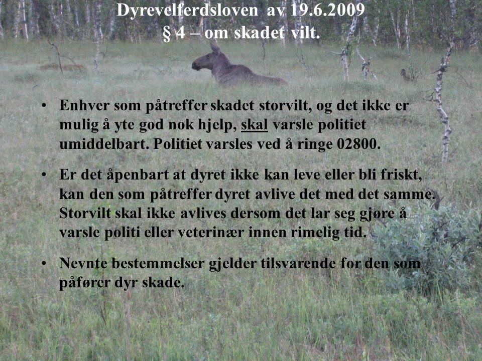 Dyrevelferdsloven av 19.6.2009 § 4 – om skadet vilt. Enhver som påtreffer skadet storvilt, og det ikke er mulig å yte god nok hjelp, skal varsle polit